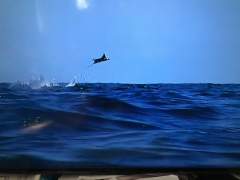 Irmageddon, Bermudes, Gulf Stream,