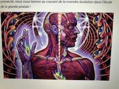 la glande pinéale, france SAMU, Hôpital SAMU,